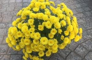 http://oferplan-imagenes.lagacetadesalamanca.es/sized/images/jardinet1-300x196.jpg